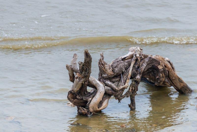 Het oude deel van logboekboom was leaved op een zandstrand bij zonsondergang met vage overzeese golf op achtergrond Verlaten logb royalty-vrije stock foto