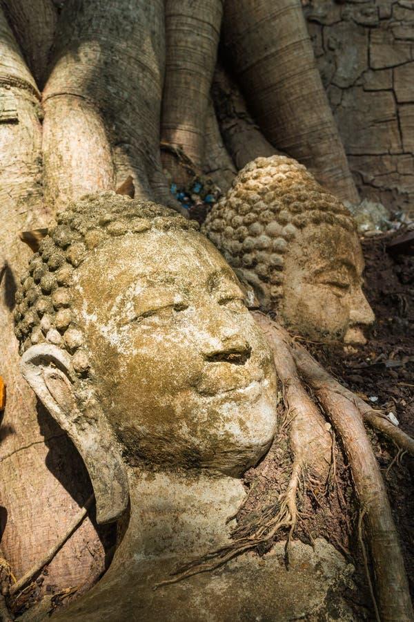 Het oude hoofd van Boedha bij de wortel van de boom royalty-vrije stock fotografie