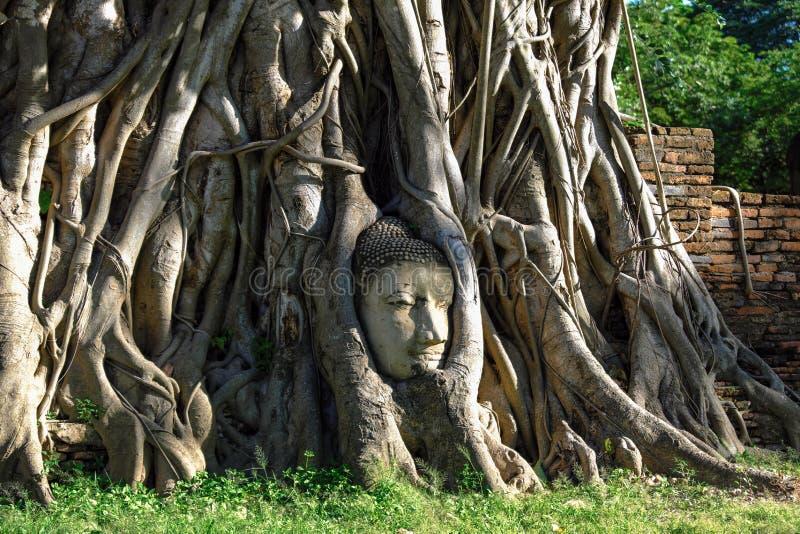 Het oude hoofd van Boedha ` s in boomwortel stock foto's