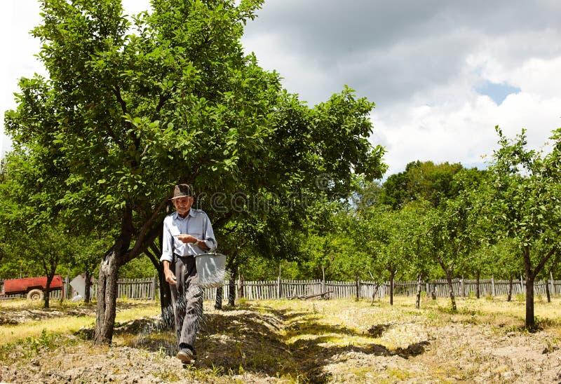 Het oude landbouwer bevruchten in een boomgaard royalty-vrije stock foto