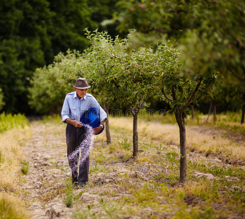 Het oude landbouwer bevruchten in een boomgaard royalty-vrije stock fotografie