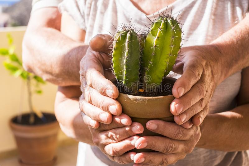 Het oude oude paar handen trok volwassen Kaukasisch terug nemend een groene levende plantcactus tropische en vakantieplaats, onbe royalty-vrije stock afbeelding