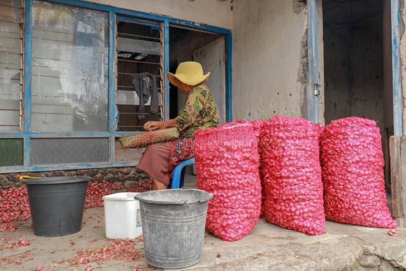 Het oude vrouw werken in landbouw sorteert en zet rode uien in zakken De slechte dame met de hoedenkrommingen over de ui Een eenv stock fotografie