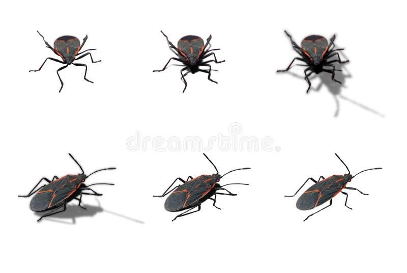 Het oudere insect van de doos stock afbeeldingen