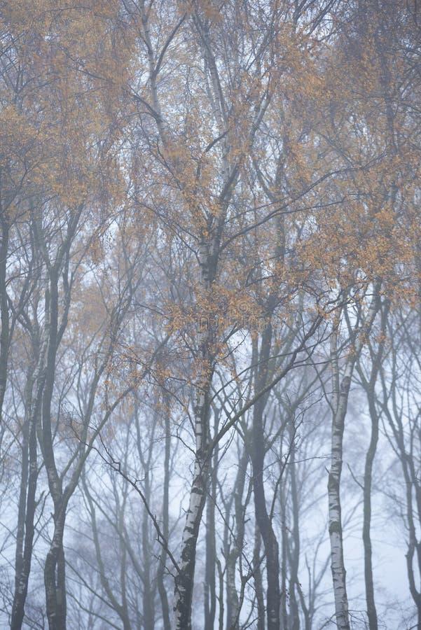 Het overweldigen van kleurrijk Autumn Fall-landschap in mistig Piekdistrict in Engeland royalty-vrije stock foto