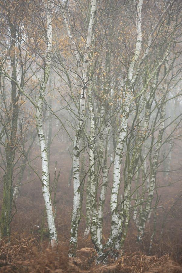 Het overweldigen van kleurrijk Autumn Fall-landschap in mistig Piekdistrict in Engeland stock fotografie