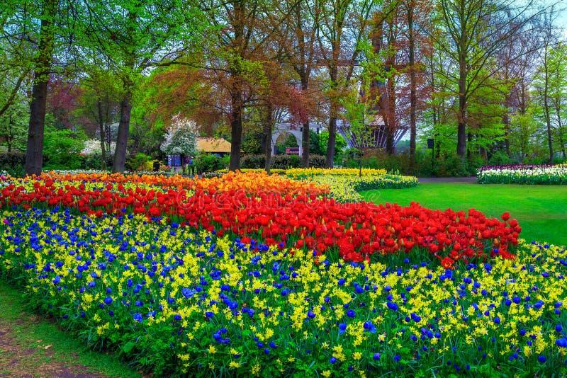 Het overweldigen van kleurrijke de lentetulpen in park, Lisse, Nederland, Europa stock foto's