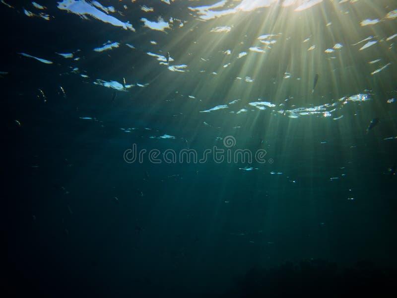 Het overweldigen van onderwaterfoto van niet erkende vissen en zonnestralen stock foto's