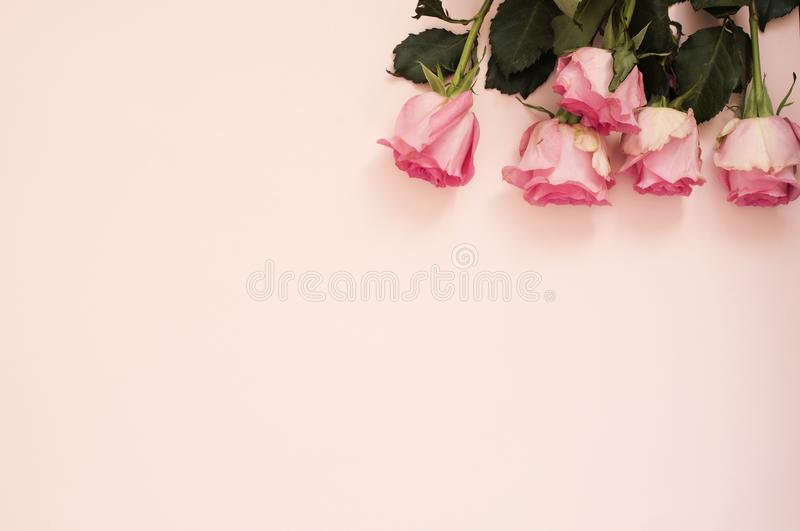 Het overweldigen van roze boeket van rozen op punchy roze achtergrond Exemplaar ruimte, bloemenkader Huwelijk, giftkaart, valenti royalty-vrije stock foto