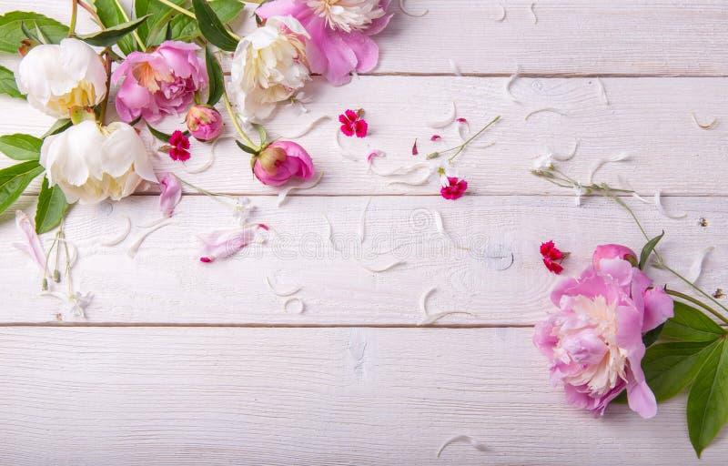 Het overweldigen van roze pioenen op witte rustieke houten achtergrond De ruimte van het exemplaar royalty-vrije stock foto