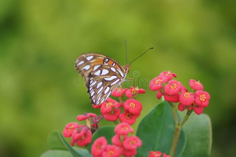Het overweldigen van Vlinder op een Bloem royalty-vrije stock afbeelding