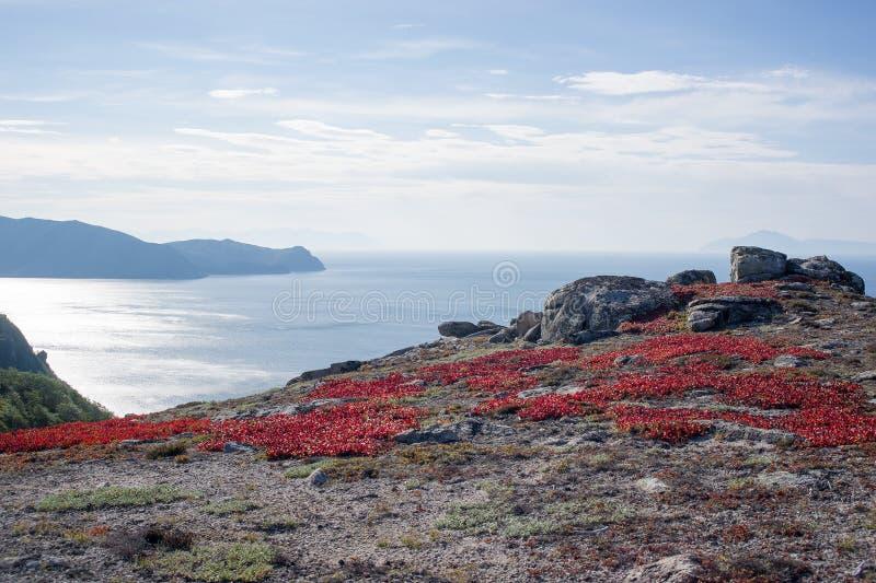 Het Overzees van Okhotsk, het Noordenkust, toendra royalty-vrije stock foto