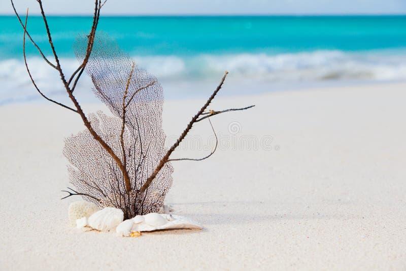 Het overzeese concept van het strand en royalty-vrije stock afbeelding