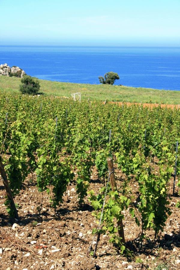 Het overzeese landschap van de wijngaard en royalty-vrije stock fotografie