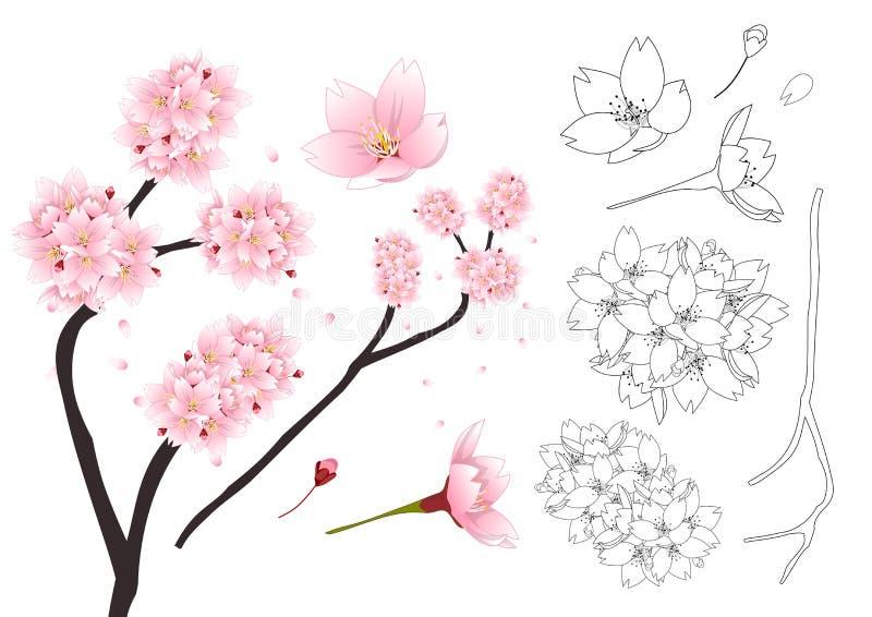 Het Overzicht van Prunusserrulata - Kersenbloesem, Sakura Nationale bloem van Japan Vector illustratie Geïsoleerdj op witte achte vector illustratie