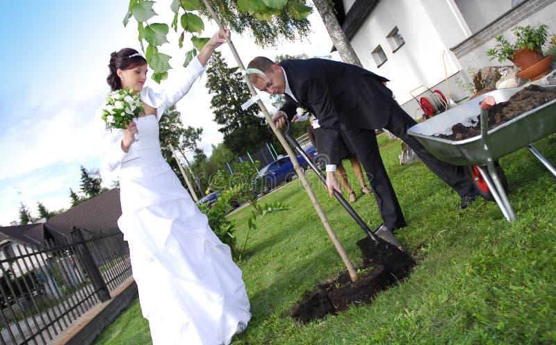 Het paar dat van het huwelijk boom plant royalty-vrije stock foto's