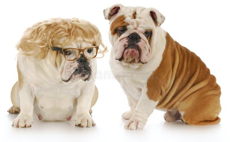 Het paar van de hond royalty-vrije stock afbeeldingen
