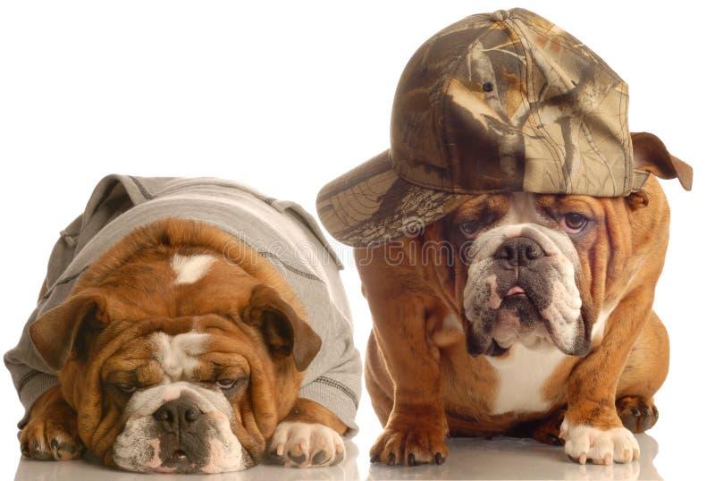 Het paar van de hond stock afbeelding