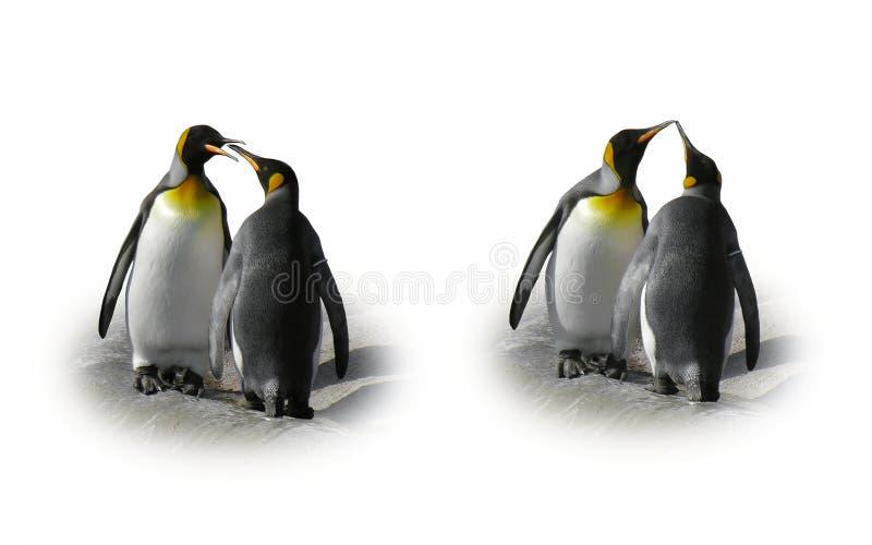 Het paar van de pinguïn in liefde - flirt, geïsoleerde kus,