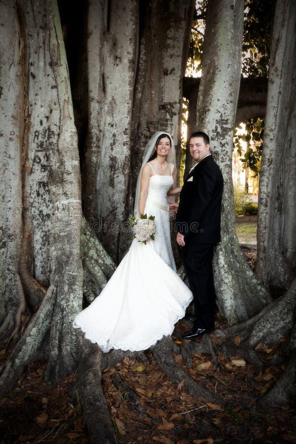 Het paar van het huwelijk onder boom stock fotografie