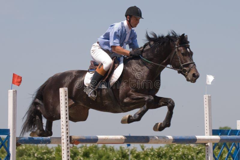 Het paard dat toont springt stock foto