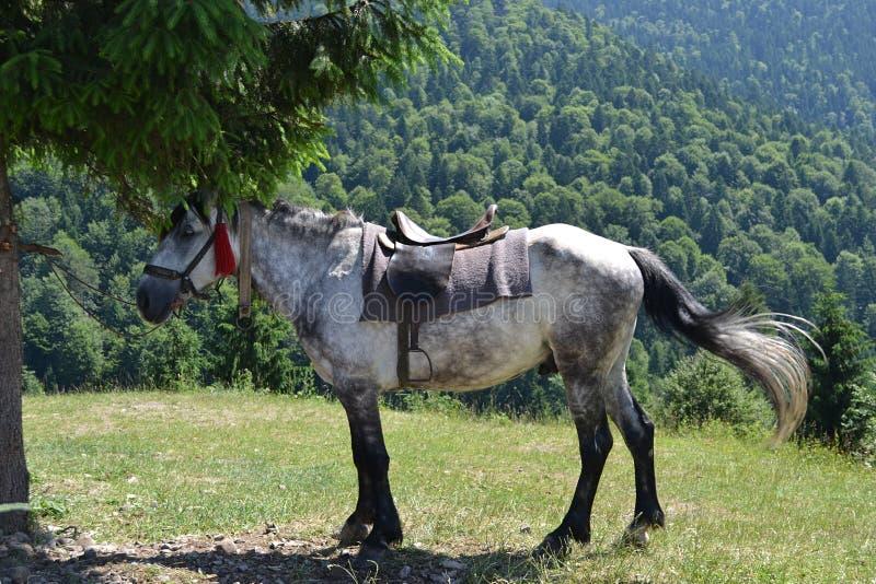 Het paard in de bergen stock fotografie