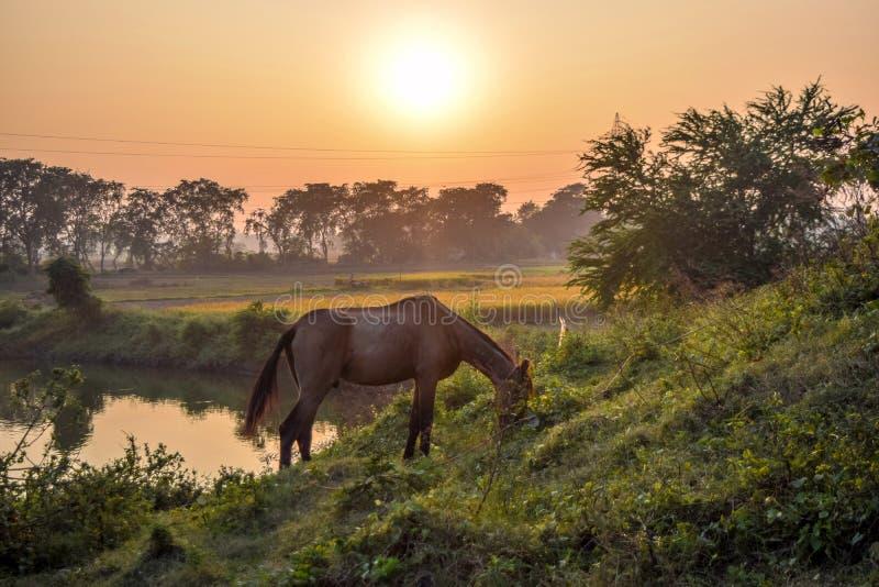 Het paard eet in de overlapping van aard stock foto's