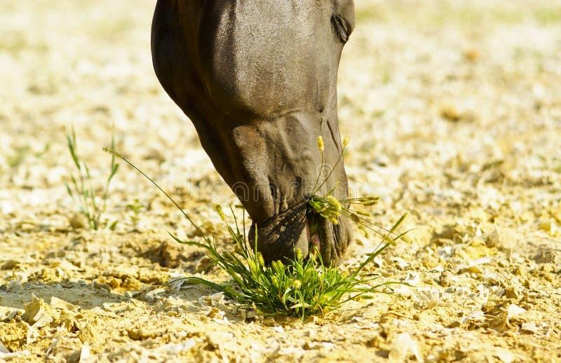 het paard eet een klein bosje van groen gras royalty-vrije stock foto's