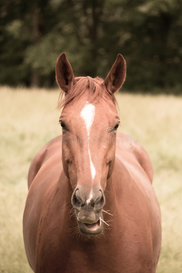 Het paard eet gras in het weiland stock fotografie
