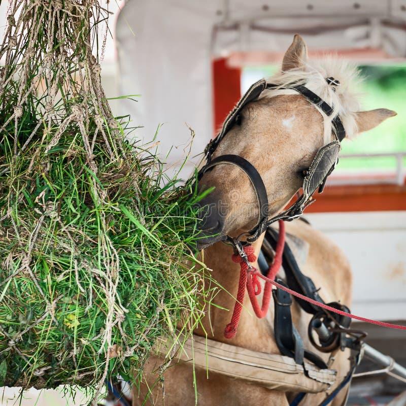 Het paard eet hooi royalty-vrije stock foto