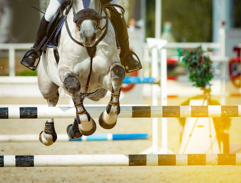 Het paard en de ruiter in tonen het springen royalty-vrije stock foto's