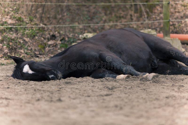 Het paard legt buiten aan kant aan slaap royalty-vrije stock fotografie