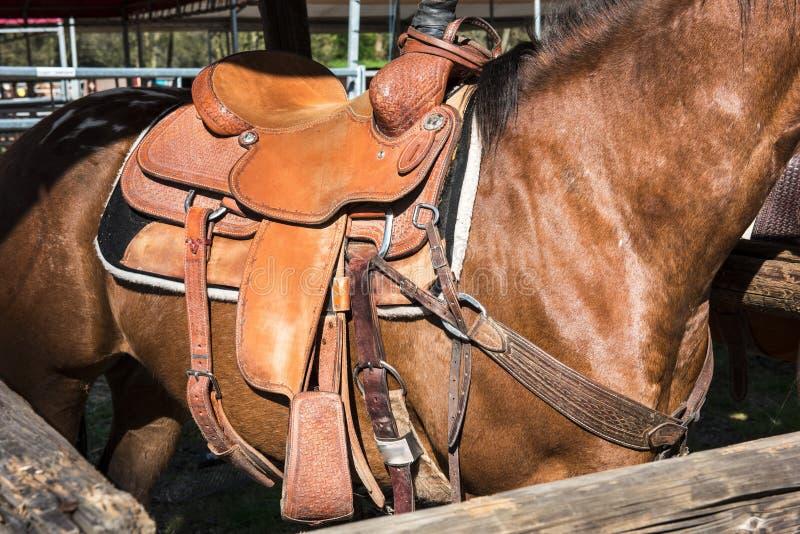 Het paard met zadel royalty-vrije stock fotografie