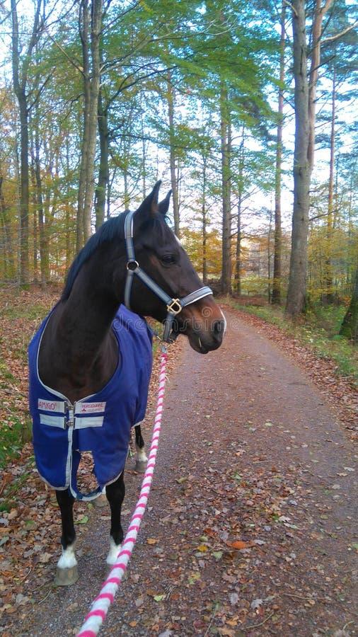 Het paard op a bereed stock afbeeldingen