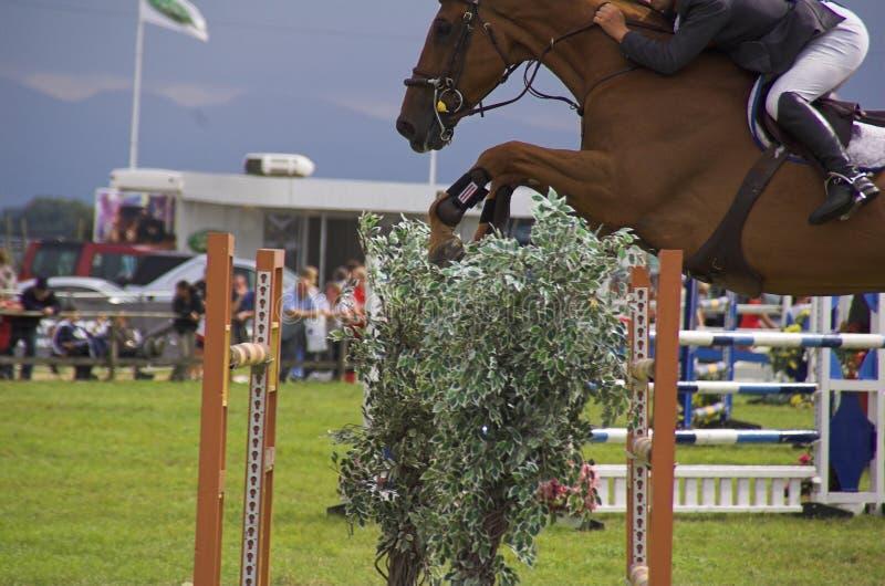 Het paard toont het springen stock afbeelding