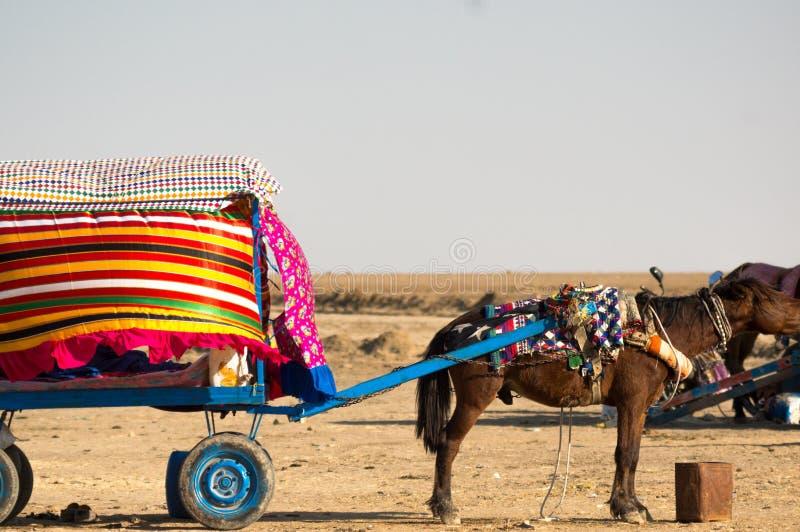 het paard trekt een kleurrijke kar voor toeristen om witte woestijn in Gujarat te zien stock foto's