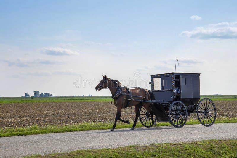 Het paard van Amish en met fouten stock foto