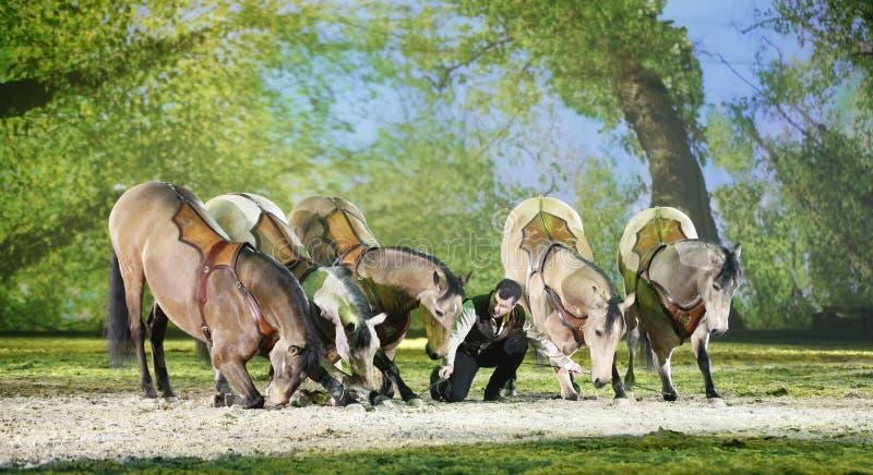 Het Paard van Apassionata toont 2013 royalty-vrije stock afbeelding