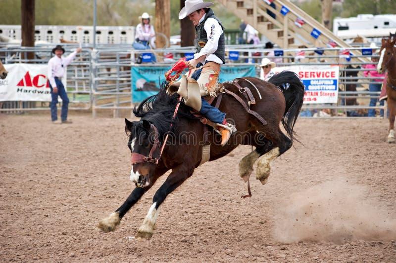Het paard van Bucking royalty-vrije stock afbeelding