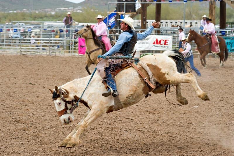 Het paard van Bucking stock foto's