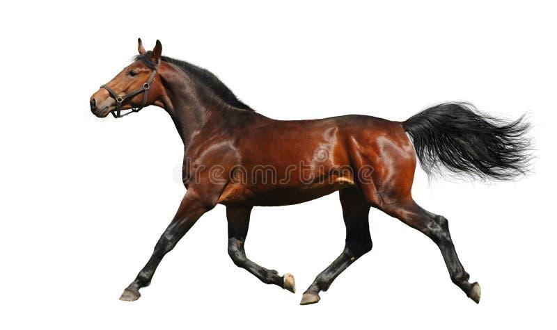 Het paard van de baai stock foto's