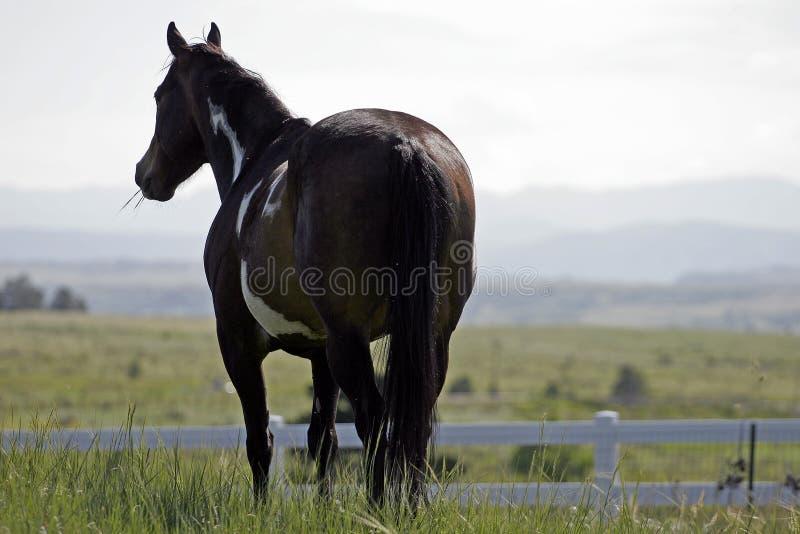 Het Paard van de verf tegen een Horizon van de Berg stock fotografie