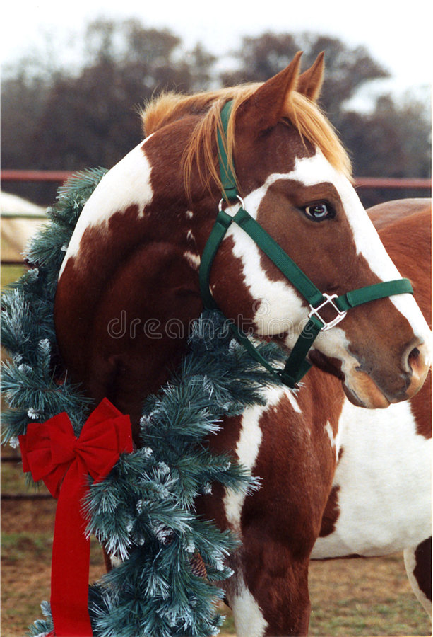 Het Paard van Kerstmis stock fotografie