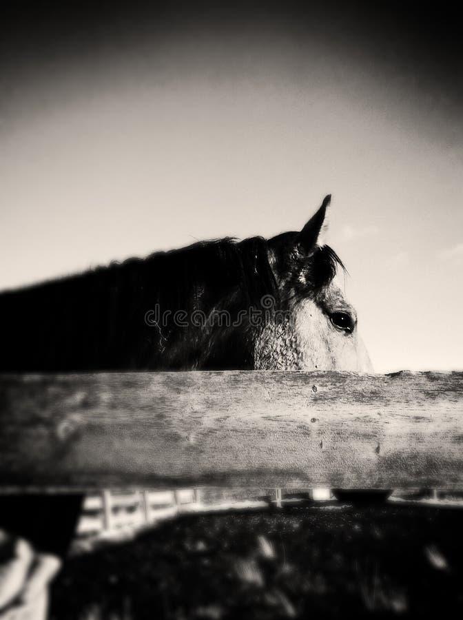 Het Paard van Wilde Westennen royalty-vrije stock foto