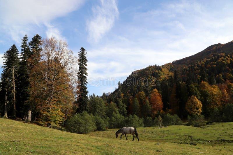 Het paard weidt in de bergen van de Kaukasus royalty-vrije stock fotografie