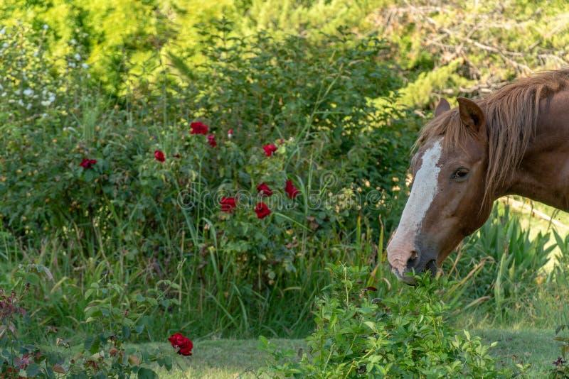 Het paard weidt op open gebied royalty-vrije stock afbeelding