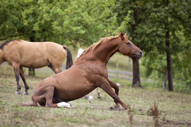 Het paard zit op weide stock foto