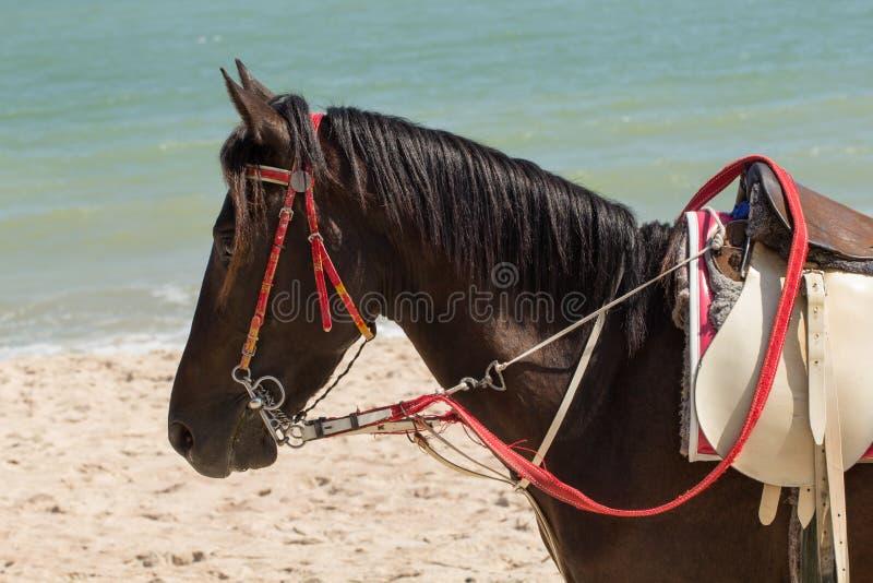Het paard zonnebaadt op zand en het strand stock afbeeldingen