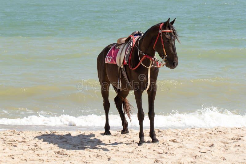 Het paard zonnebaadt op zand en het strand stock afbeelding