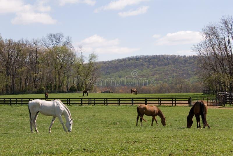 Het paardlandbouwbedrijf van Virginia stock foto
